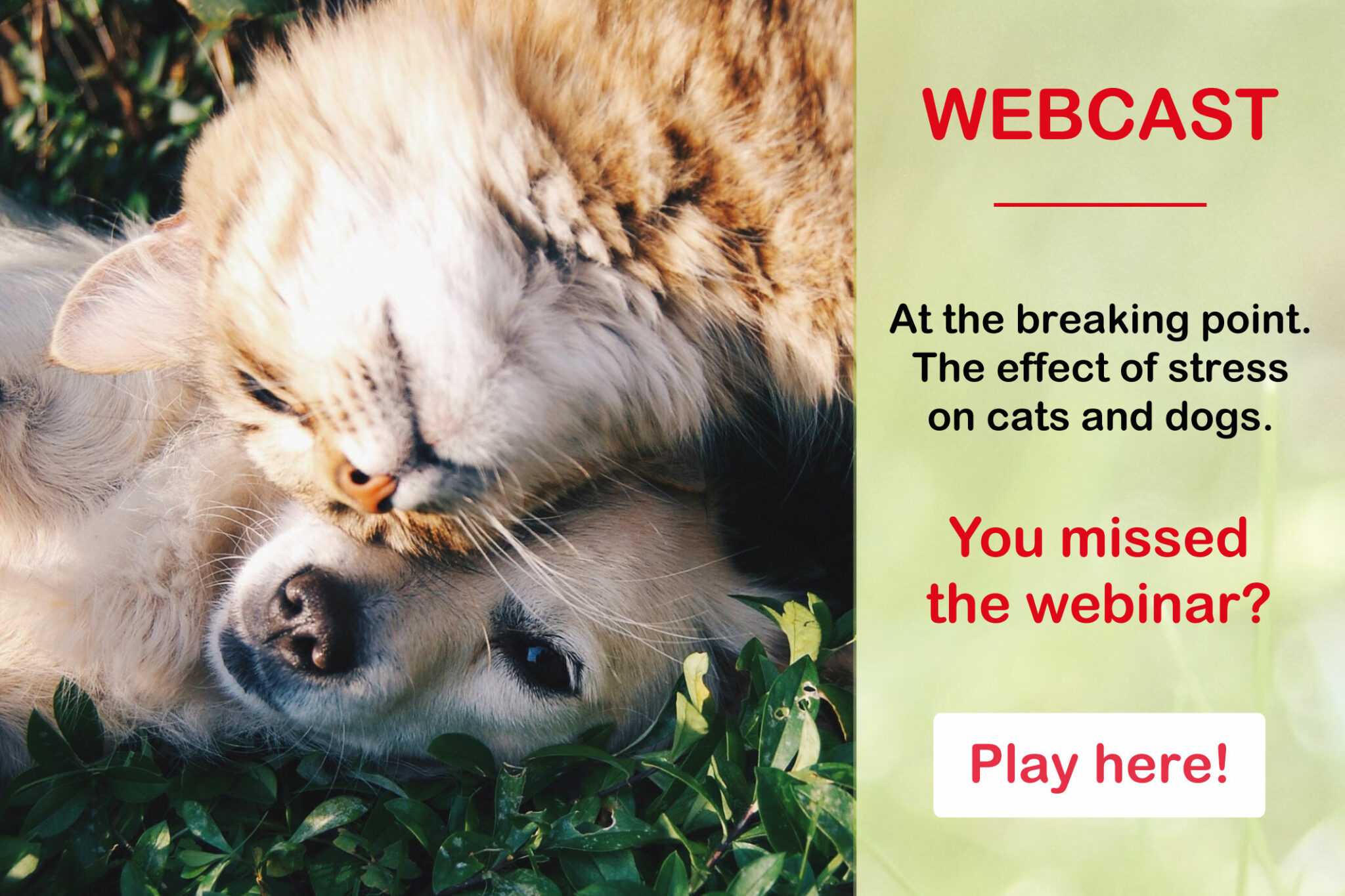 Webcast: at the breaking point. The effect of stress on cats and dogs.